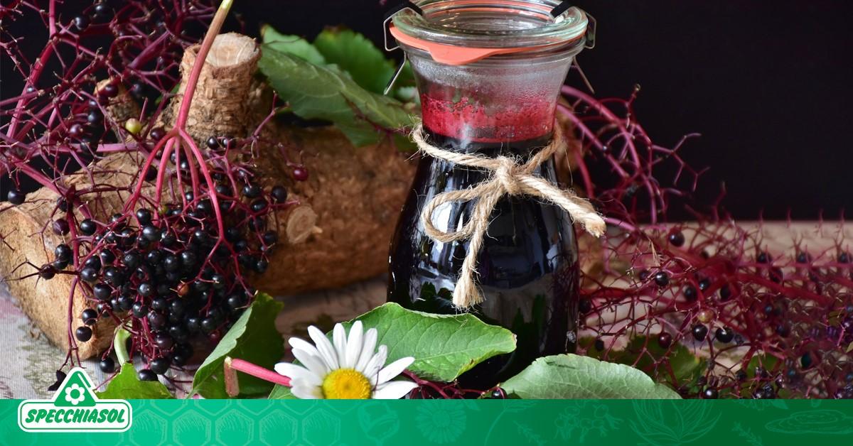 Σαμπούκος: Ένα βότανο με πολλαπλές αντιικές ιδιότητες που λίγοι γνωρίζουν!