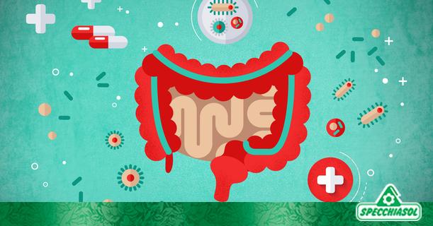 Γραφιστική φωτογραφία αποτυπώνει το υγιές πεπτικό σύστημα λόγω χρήσης προβιοτικών